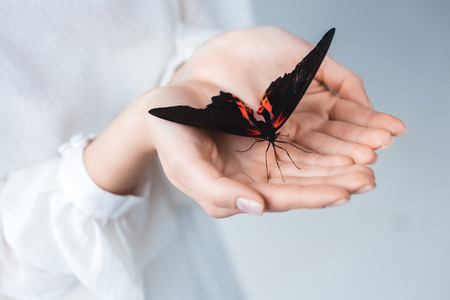 Cropped view of woman with beautiful alive butterfly in hands, isolated on grey background