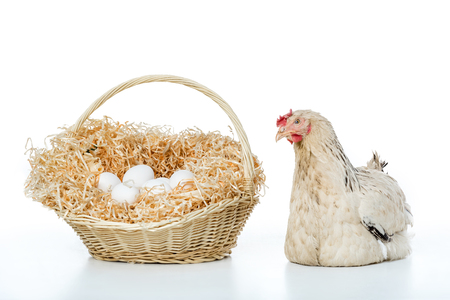 hen with wicker basket and eggs isolated on white Reklamní fotografie