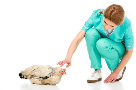 portrait of veterinarian in uniform with chicken isolated on white
