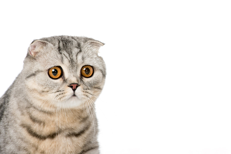 close-up view of adorable furry cat looking at camera isolated on white Stock fotó