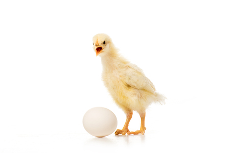 close-up view of adorable little chick with egg isolated on white