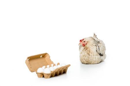 hen and raw eggs in egg box isolated on white Reklamní fotografie
