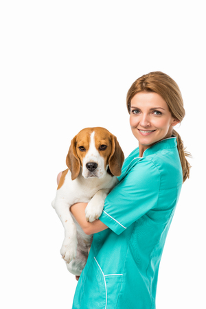 side view of smiling veterinarian in uniform holding cute beagle dog isolated on white 写真素材
