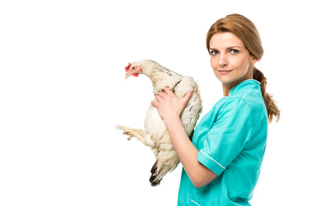 side view of veterinarian in uniform holding chicken isolated on white Imagens