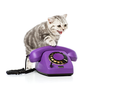 adorable kitten on purple rotary telephone isolated on white Stock Photo