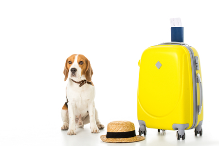 beagle dog with suitcase, passport, ticket and straw hat isolated on white 版權商用圖片