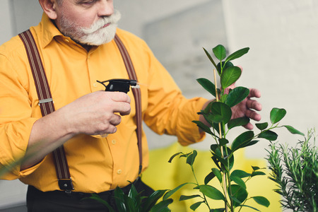 cropped shot of senior man holding spray bottle and watering houseplant 스톡 콘텐츠