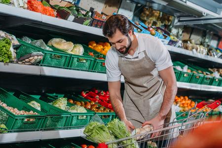 commesso maschio in grembiule che dispone di verdure fresche nel negozio di alimentari Archivio Fotografico
