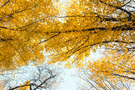 Bottom view of beautiful autumnal forest with yellow trees Banco de Imagens
