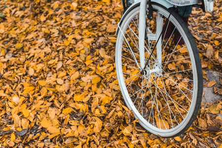 Close up view of wheel of white bicycle in autumnal forest Banco de Imagens