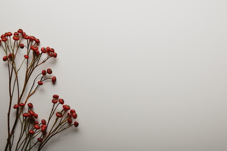 Top view of red holly berries on white background Stock Photo