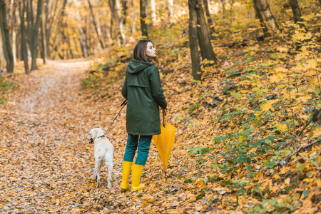 Beautiful woman in gumboots holding yellow umbrella and walking with dog on leafy path in autumnal forest 版權商用圖片