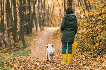 Back view of woman in gumboots holding yellow umbrella and walking with dog on leafy path in autumnal forest