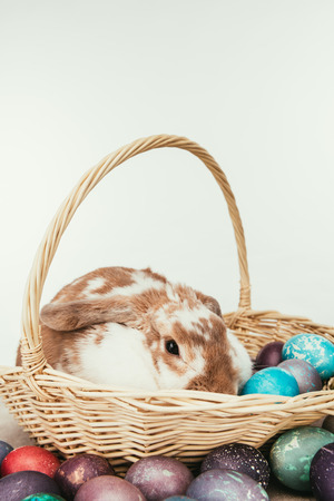 Domestic rabbit lying in straw basket with painted Easter eggs isolated on white background Stock Photo