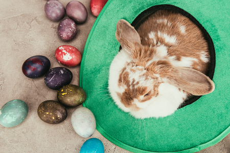 High angle view of domestic rabbit in green hat with Easter eggs on surface