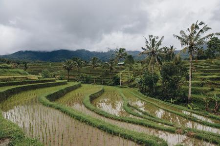 Beautiful view of Jatiluwih Rice Terraces in Bali
