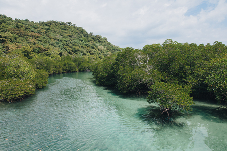 Beautiful green vegetation and water at Phi-Phi island, Thailand