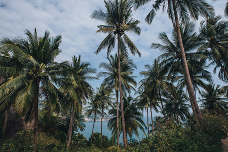 Beautiful green palm trees on beach, Ko Tao island, Thailand