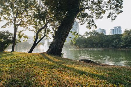 Iguana crawling on green grass in park at Bangkok, Thailand