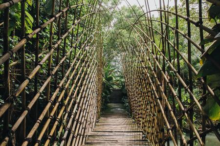 Beautiful green vegetation and wooden footbridge in Bali