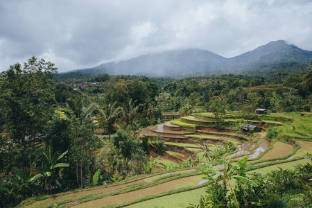 Beautiful tranquil view of Jatiluwih Rice Terraces in Bali Stockfoto