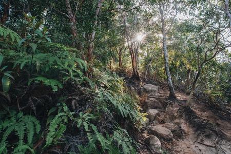 Beautiful green trees and fern in Krabi, Thailand Stock Photo