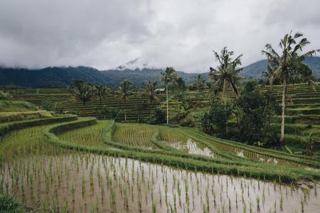 Beautiful scenic view of green Jatiluwih Rice Terraces in Bali