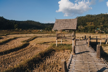 Wooden footbridge through agricultural field at Pai, Thailand