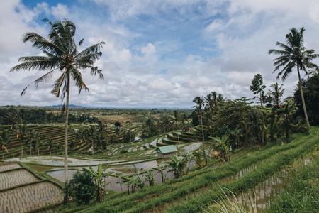 Scenic view of organic Jatiluwih Rice Terraces in Bali