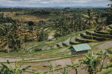 Majestic view of Jatiluwih Rice Terraces in Bali