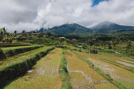 Scenic view of Jatiluwih Rice Terraces in Bali Stockfoto