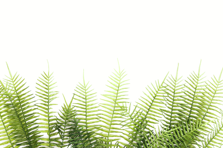 Elevated view of arranged green fern branches isolated on white background