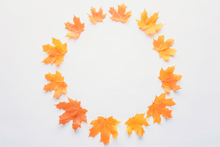 Flat lay of orange maple leaves in circle isolated on white background