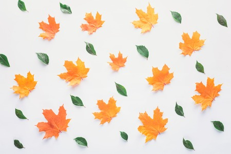 Collection of orange and green leaves isolated on white background