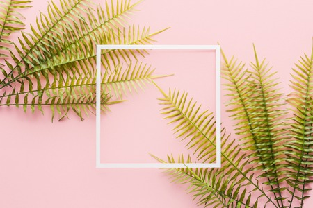 Elevated view of fern branches and white frame on pink background