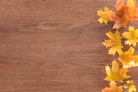 Top view of yellow autumnal maple leaves on brown wooden surface