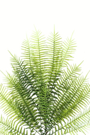 Flat lay with beautiful green fern branches isolated on white background Stok Fotoğraf