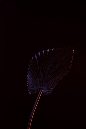 Toned picture of beautiful tropical leaf with purple lighting isolated on black background Stock Photo