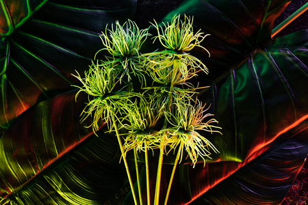 beautiful plant and palm leaves with red lighting