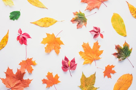 Top view of scattered autumnal leaves isolated on white background Banco de Imagens