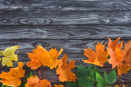 top view of orange and green autumnal maple leaves on wooden surface Banco de Imagens