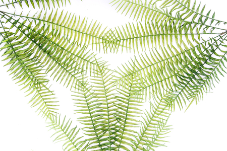 elevated view of beautiful green fern branches isolated on white
