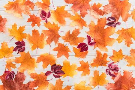 top view of orange and burgundy autumnal maple leaves on wooden surface Banco de Imagens
