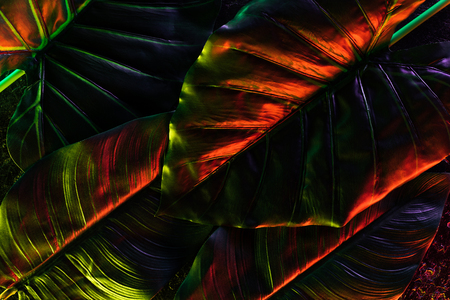 full frame image of beautiful palm leaves with red lighting Stock Photo