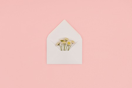 top view of open white envelope with beautiful small flowers isolated on pink Фото со стока
