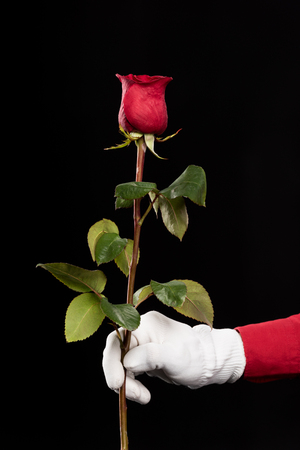 cropped image of mime holding red rose isolated on black Stock Photo