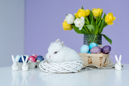 Cute fluffy bunny by painted eggs on table with Easter decor