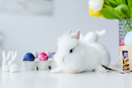 Fluffy bunny by painted eggs with Easter decor on table Stock Photo