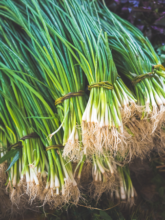 close-up view of bunches of fresh green spring onions