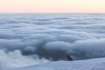 Husky dog sitting on snowy mountain and looking at clouds, Carpathian Mountains, Ukraine Stock Photo